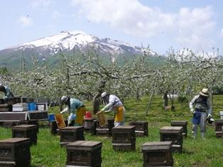 国産はちみつ 養蜂