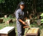 天然はちみつ 新海養蜂場