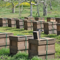 新海養蜂場 蜂蜜
